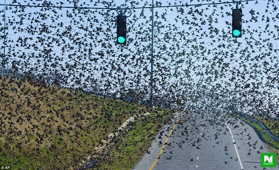 Thousands Of Birds Drop Dead From The Sky In New Mexico (Photos)